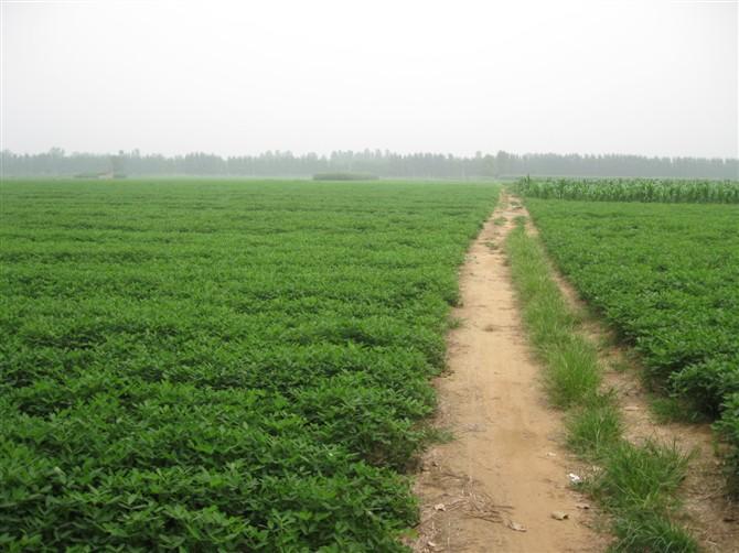 我国农业产业化仍然面临一些突出问题